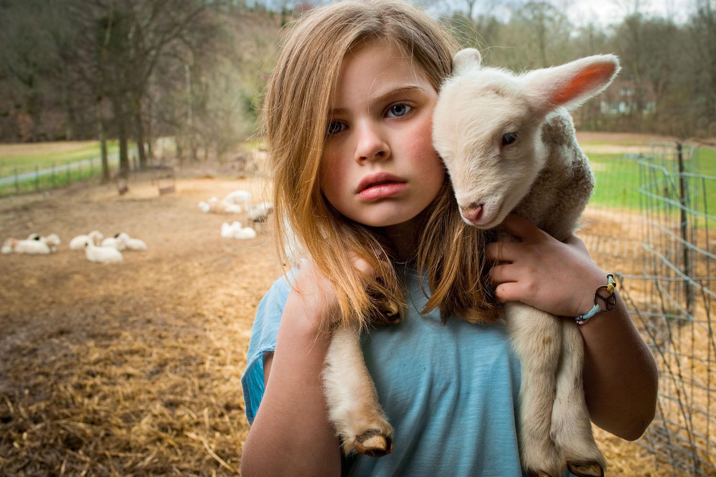 Дети и овечки фото